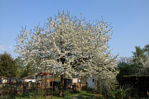 Frühling, Bäume, Gelb, Blau, Coaching, Coach