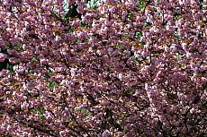 Frühling, Farbe, Neu, Schön, Baum, Blüte, Coaching, Coach, Sachsen