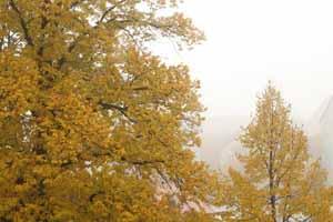 Aufmerksamkeit, Achtsamkeit, Coaching, Coach, Herbst, Herbststimmung, Nebel