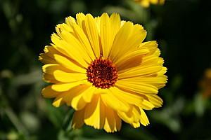 Sonne, gelb, Motivation, Wärme, Coaching, Beratung, Unternehmensberatung